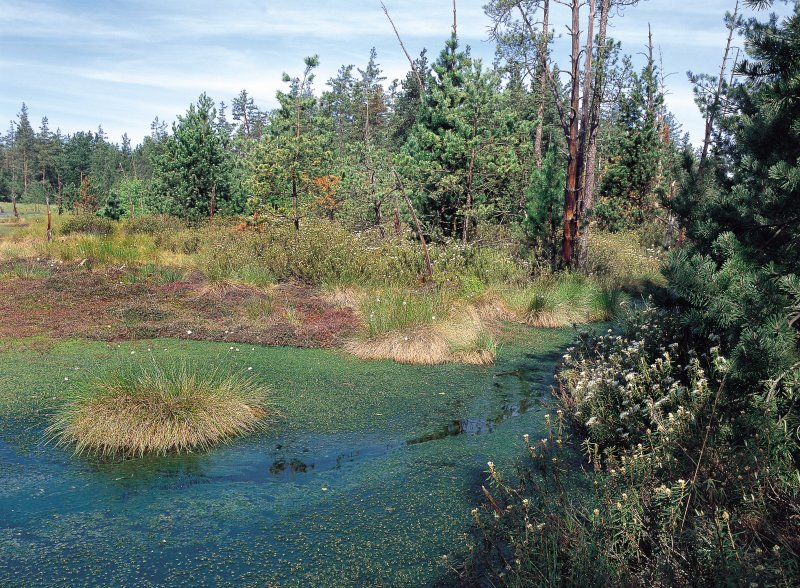 Národní přírodní rezervace a naučná stezka Červené blato