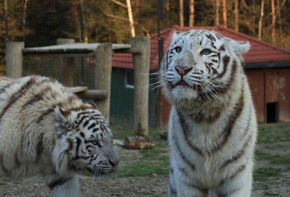 ZOO Dvorec - Park exotických zvířat